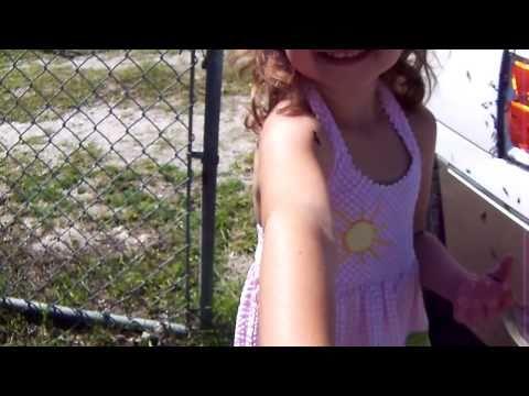 Lovebugs in Florida