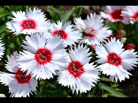 Обязательно посадите эти цветы на рассаду в марте! Какие цветы посеять на рассаду в марте?