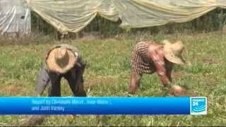 Can Morocco afford to export food to Qatar? - FOCUS - 07/10/2013
