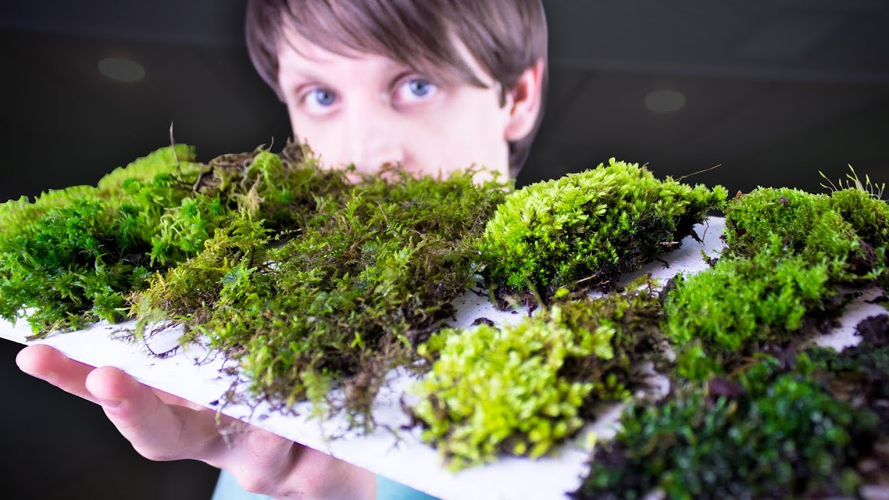 Collecting Identifying Moss Youtube