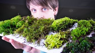 Collecting & Identifying Moss