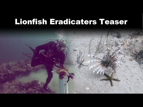 Invasive Lionfish Control Team Teaser