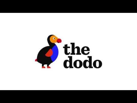 The Dodo: Dogs and PTSD