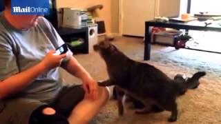program flea control for kittens