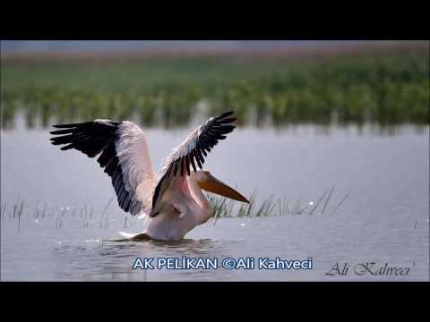 BURSA'NIN KUŞLARI (Birds Of Bursa)