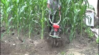 玉米園開溝 CY80 Garden tiller ridging in corn field 擎億機械中耕機 농업 기계 中耕機