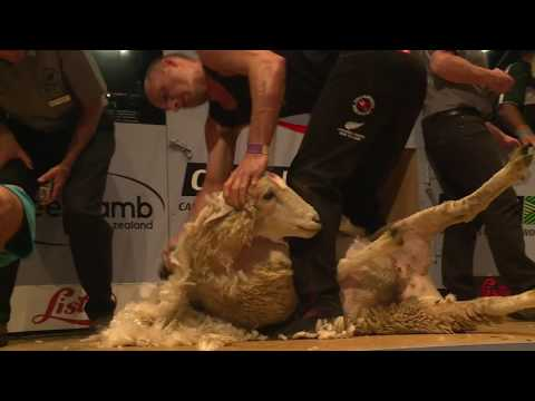 All Nations Open Shearing Final