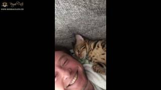 Alex The Adorable Bengal Kitten
