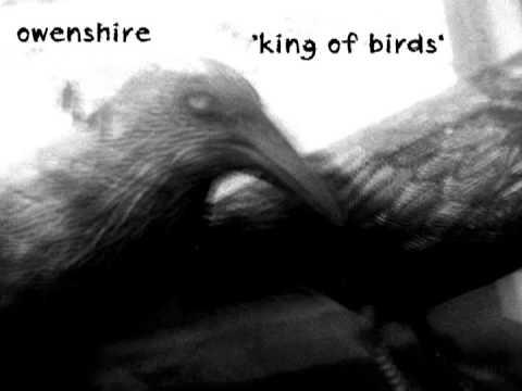 Owenshire: King Of Birds [R.E.M. cover]