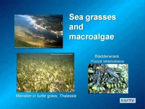 Limnology - Estuaries and Salt Lakes
