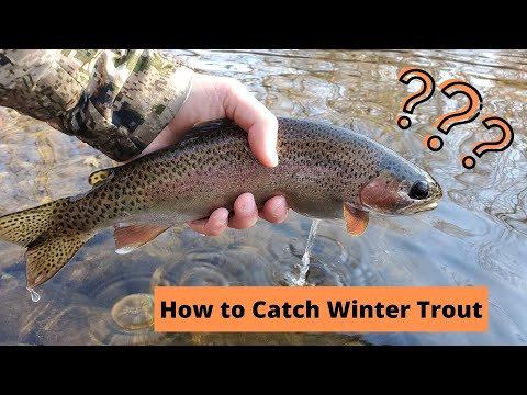 How To Catch Winter Trout | Boise River Fishing