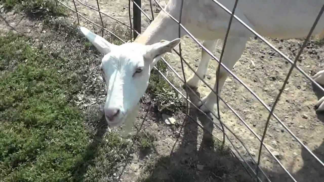 simmons farm petting zoo youtube