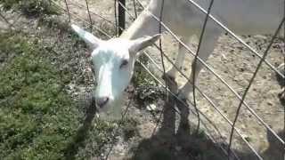 Simmons Farm Petting Zoo.
