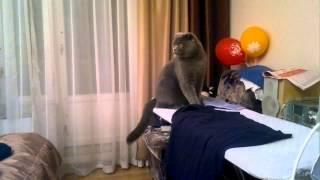 Кот оникс отчаянно, но безуспешно охотится(, 2012-12-03T10:41:05.000Z)