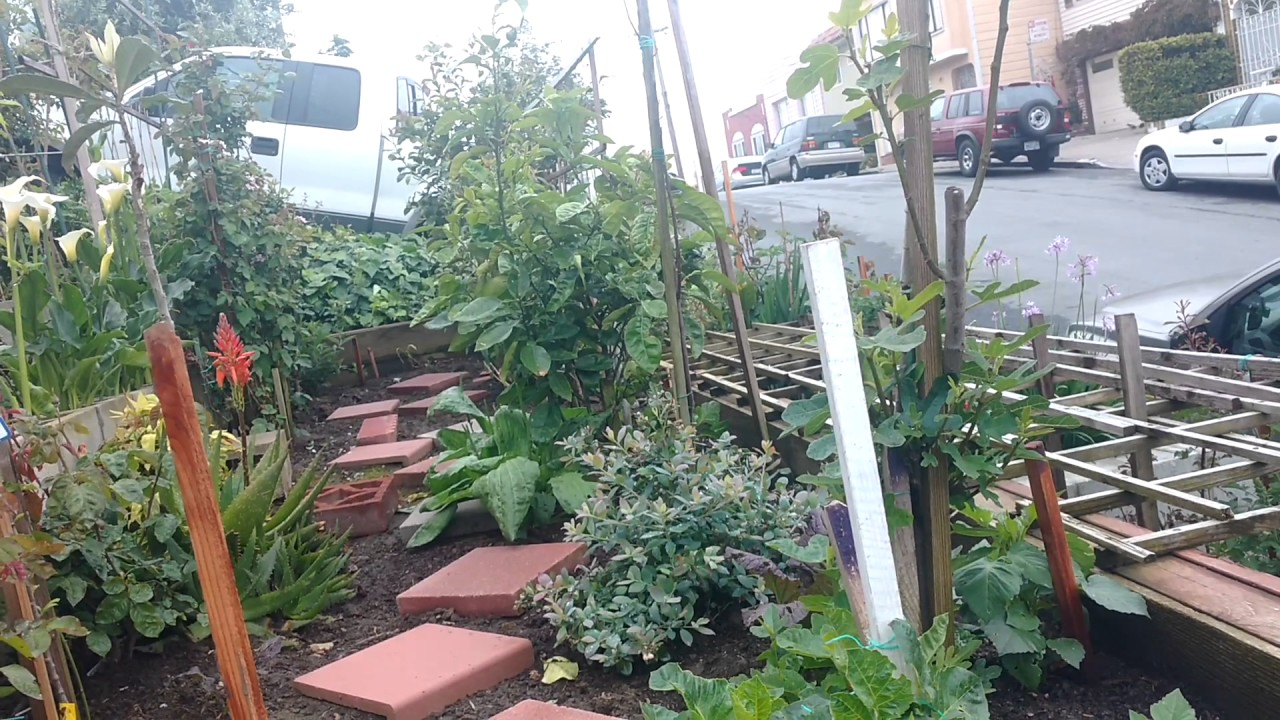 Urban Gardening Gets Serious On The Sidewalk! Excelsior, San Francisco