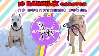 10 ВАЖНЫХ СОВЕТОВ по воспитанию собак | дрессировка собак