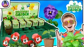 Woolworths Discovery Garden! #1     TASTIEST COLLECTIBLES EVER!      Herbs, Flowers & Vegetables!!