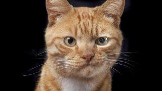 НОВые приколы с котами 2016 / Смешные коты и кошки 2016 / ТОПовые приколы с котами и кошками #2