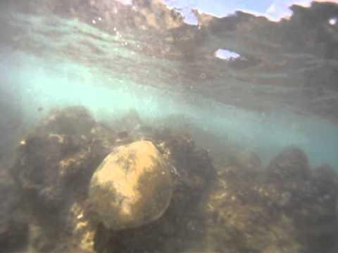 Sea Turtle Whispering