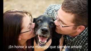 Entendiendo la decisión de optar por la eutanasia (Mascotas)