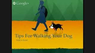 Dog Walking Tips - Walk In Front (1 Of 5)