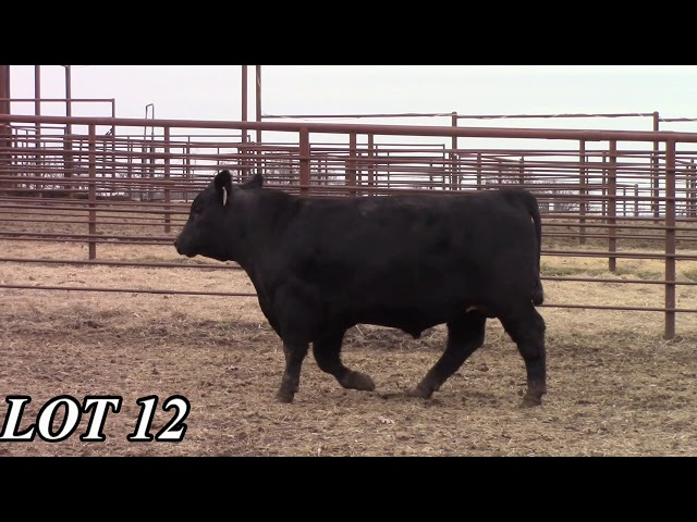 Mead Angus Farms Lot 12