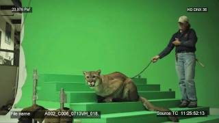 BYU Cougar Behind the Scenes - Real Cougar Commercials
