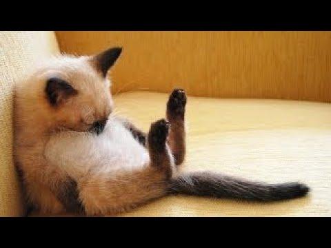 Как заснуть БЫСТРО!? 10 ЛАЙФХАКОВ для СНА Каждый должен их знать!!