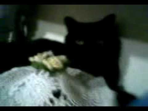 Salem il gatto nero