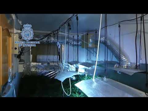 Police find cannabis farm in Malaga