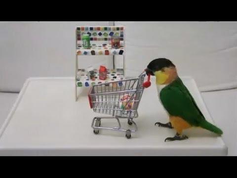 Burung Lovebird Shopping - lucu banget Mp3