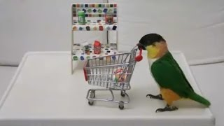 Burung Lovebird Shopping - lucu banget