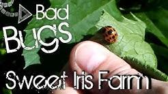 11 Common Garden Pests - Garden Pest Identification