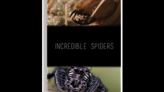 NG. Удивительные пауки / NG: Incredible spiders (2015) HDTV 1080i от KINOHITHD.COM