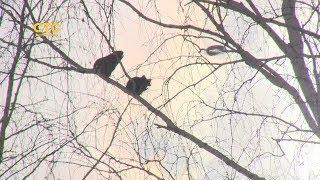 Грачи прилетели и оккупировали: громогласные птицы тревожат горожан