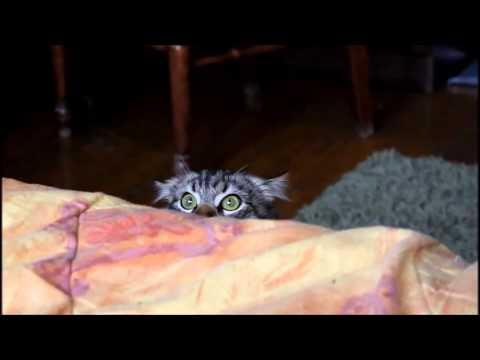 Сборник смешных видео с котами відео –