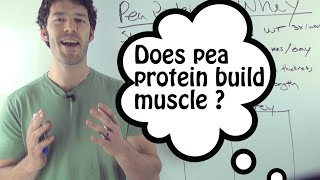 Whey Protein VS Pea Protein: do they compare?