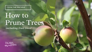 How to Prune Trees by Tagawa Gardens and Mike Landers, ISA Certified Arborist
