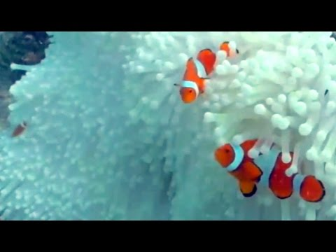 Australian Broadcasting on Great Barrier Reef Bleaching 2016