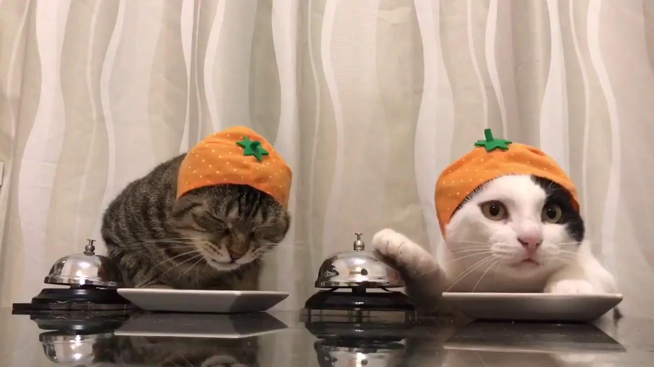 Katzen klingeln für Essen! 😺 - YouTube