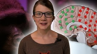 Is a bigger brain better? w/ Brain Scoop - Zoo La La (Ep 53) - Earth Unplugged thumbnail