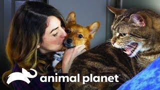 ¡El gato Darkness se cambia al lado bueno de la fuerza! | Mi gato endemoniado | Animal Planet