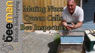 Apidea Mating Nucs Bee Inspectors and Queen Cells