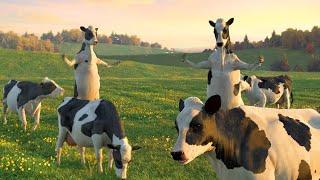 Cow Dance Funny أبقار رقص Menari Sapi 암소 춤 Bò nhảy - For Children And Babies