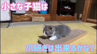 かなり小さい子猫、爪研ぎはまだ無理かな?  【子猫保護】
