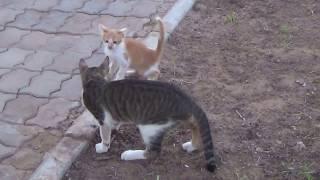 Африканские котята, Марокко, Северная Африка Аnimals,Tiere
