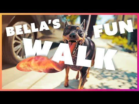 Bella the Min Pin's daily walk