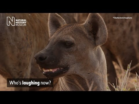 Who's laughing now? | Natural History Museum