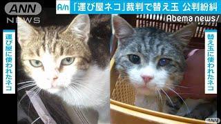 """違法薬物""""運び屋のネコ"""" 裁判で替え玉が発覚(19/11/17)"""