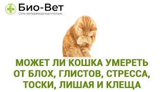Может ли кошка умереть от блох, глистов, стресса, тоски, лишая и клеща